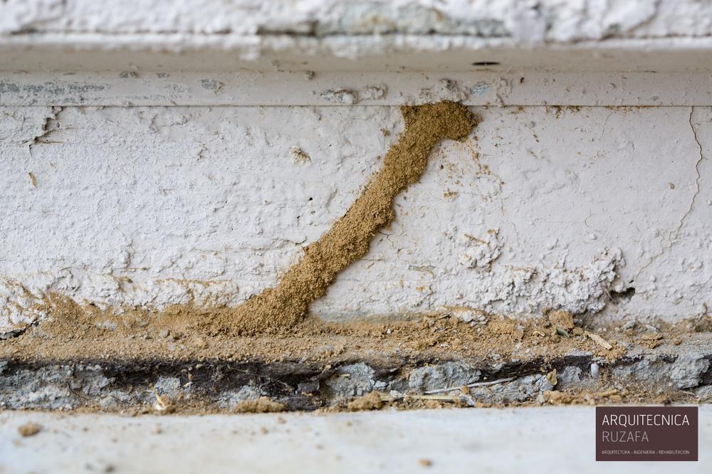 informes previos a la compra de una vivienda